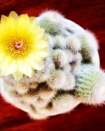 My Cactus is bloomingNature is my inspiration Love our Motherhellip